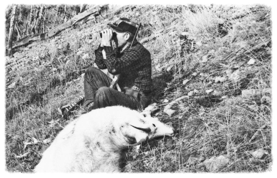 Rocky Mountain Goat Hunt