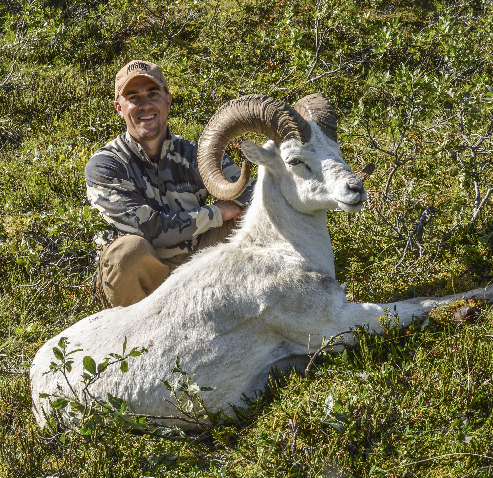 Sheep-JohnN-2016.jpg