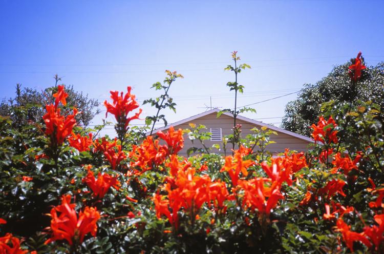 garden-grove_29.jpg