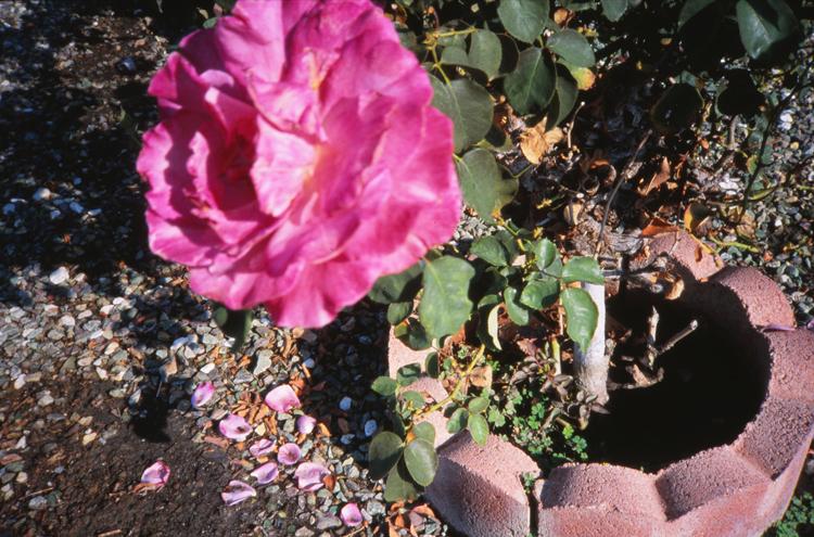 garden-grove_08.jpg