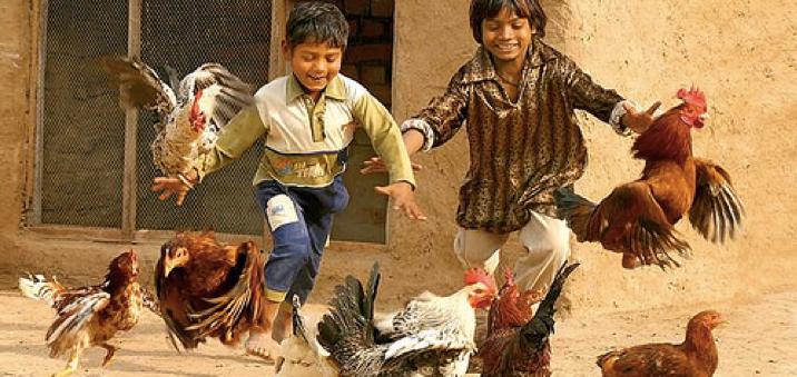 http://runningscaredsite.wordpress.com/2016/01/13/think-international-stunt-chickens/stunt-chickens/