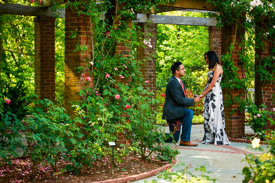 virginia-surprise-proposal-photographer