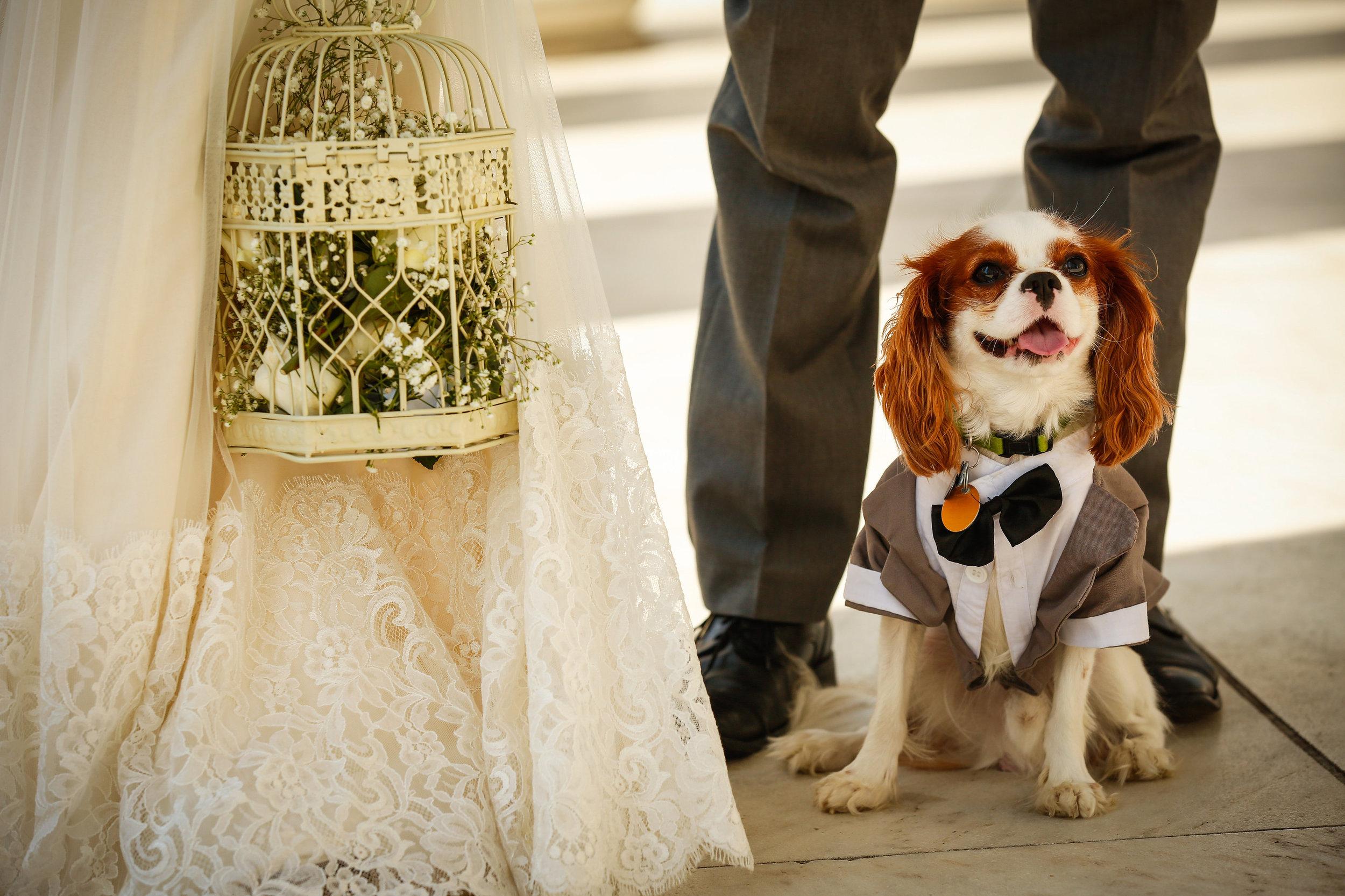 dog-in-bridal-party-dc-wedding