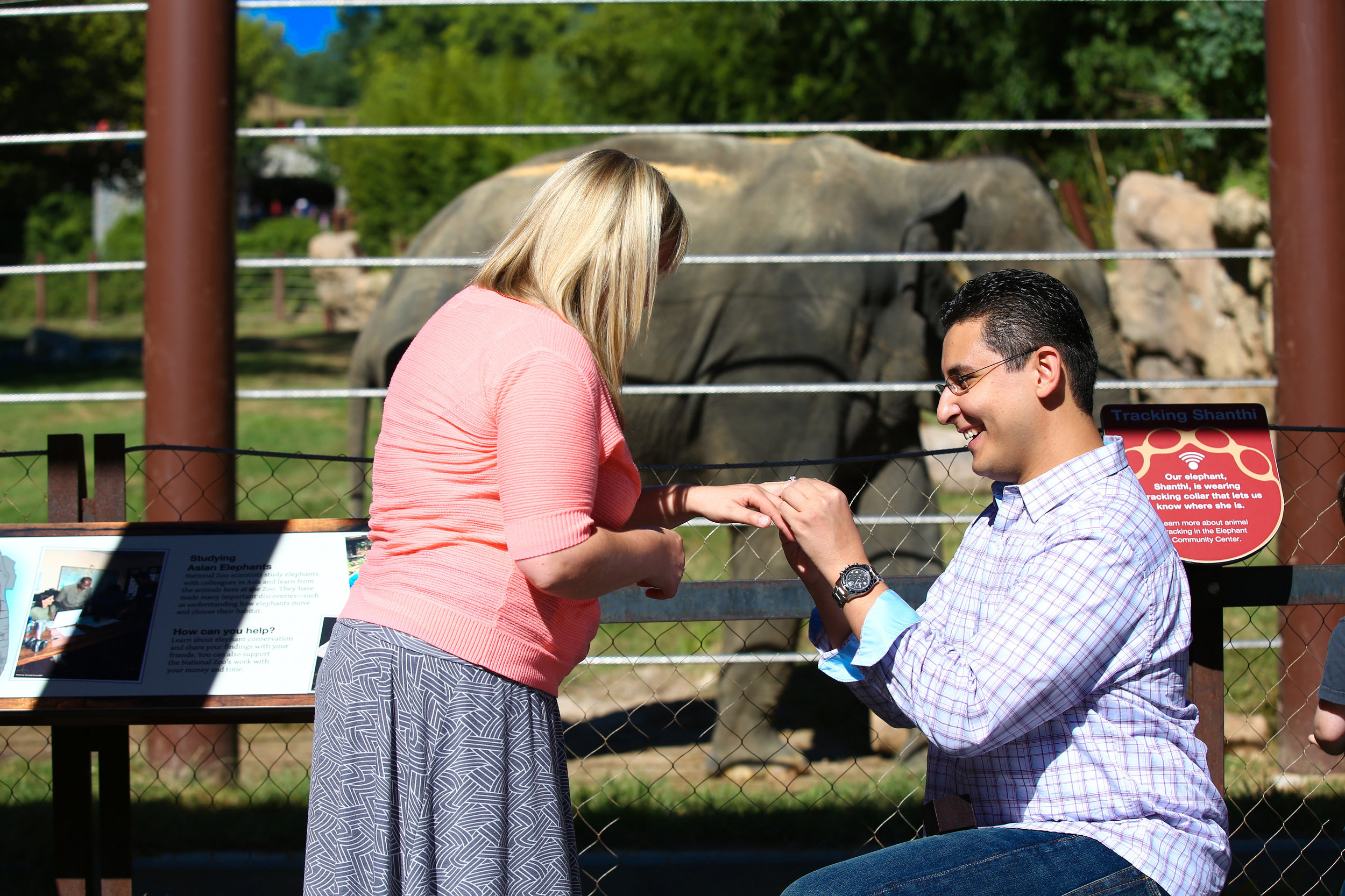 National-Zoo-Surprise-Proposal-Washington-DC