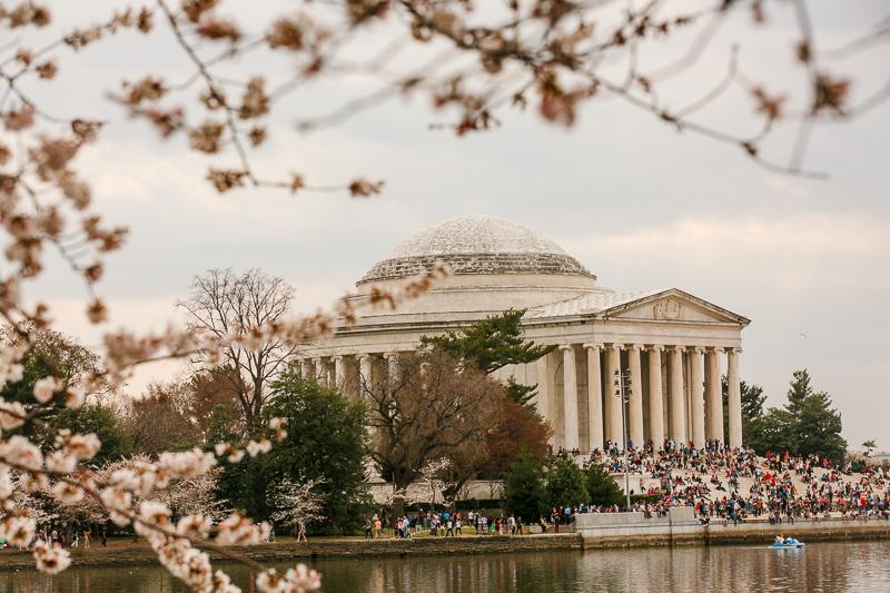 Washington-DC-Cherry-Blossom-Engagement-Session
