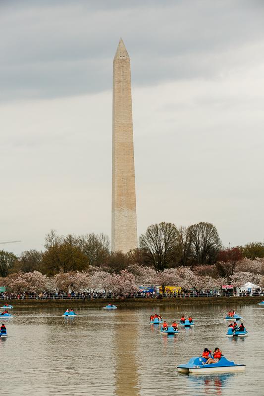 Washington-DC-Cherry-Blossom-Surprise-Propsoal