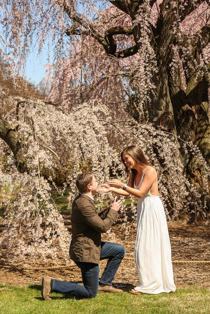 national-arboretum-surprise-proposal-photographer
