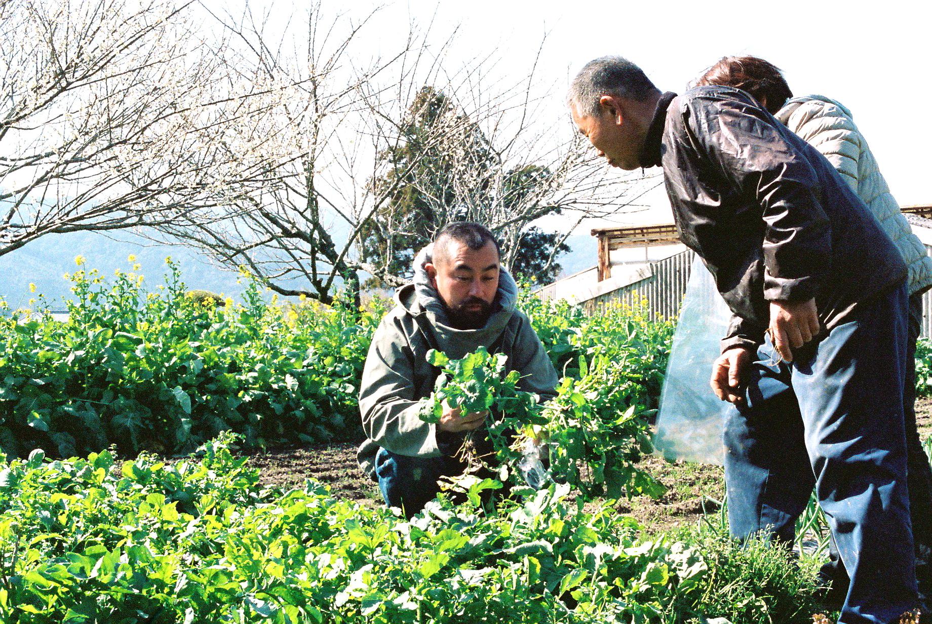雑草の中に新鮮な野菜たち。井戸水、肥料は豚小屋から自  給自足が無理なく行われている。