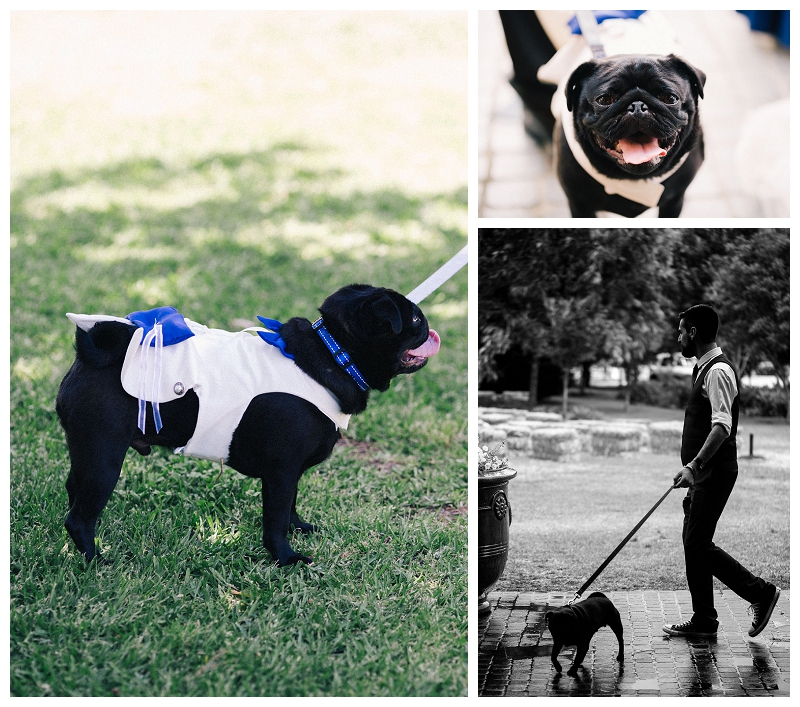 Dogs in wedding | | Beka + Con | Sydney Polo Country Club | Photography | Photo Booth | Stop Motion