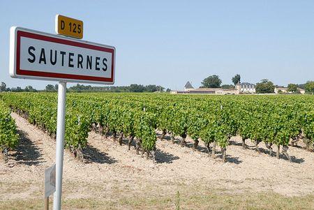 Sauternes Region  -  image: naturalsweetwines.blogspot.com