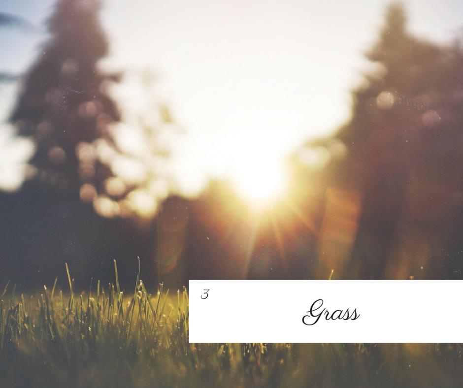 FF_Grass.png