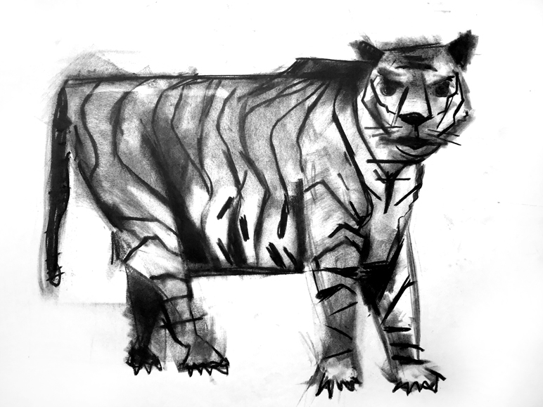 tigersketch.jpg