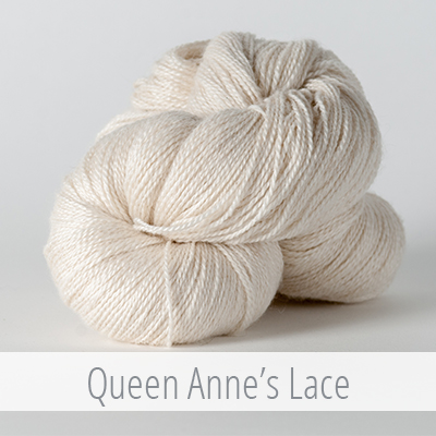 queen anne's lace.jpg