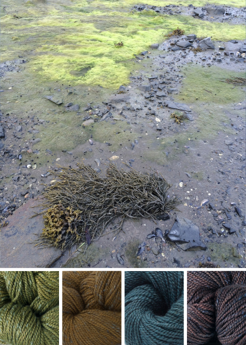 color inspiration: Acadia / asparagus, marsh, blueleaf birch, moraine