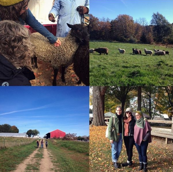 New York Sheep and Wool Festival, Rhinebeck 2015