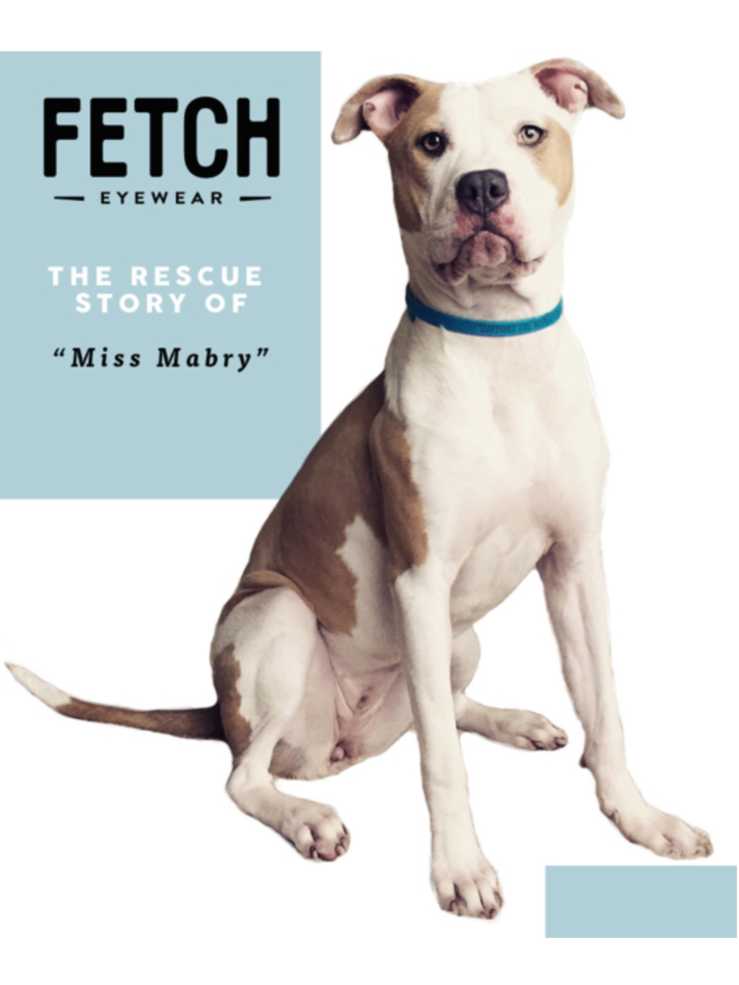 Fetch Rescue Story