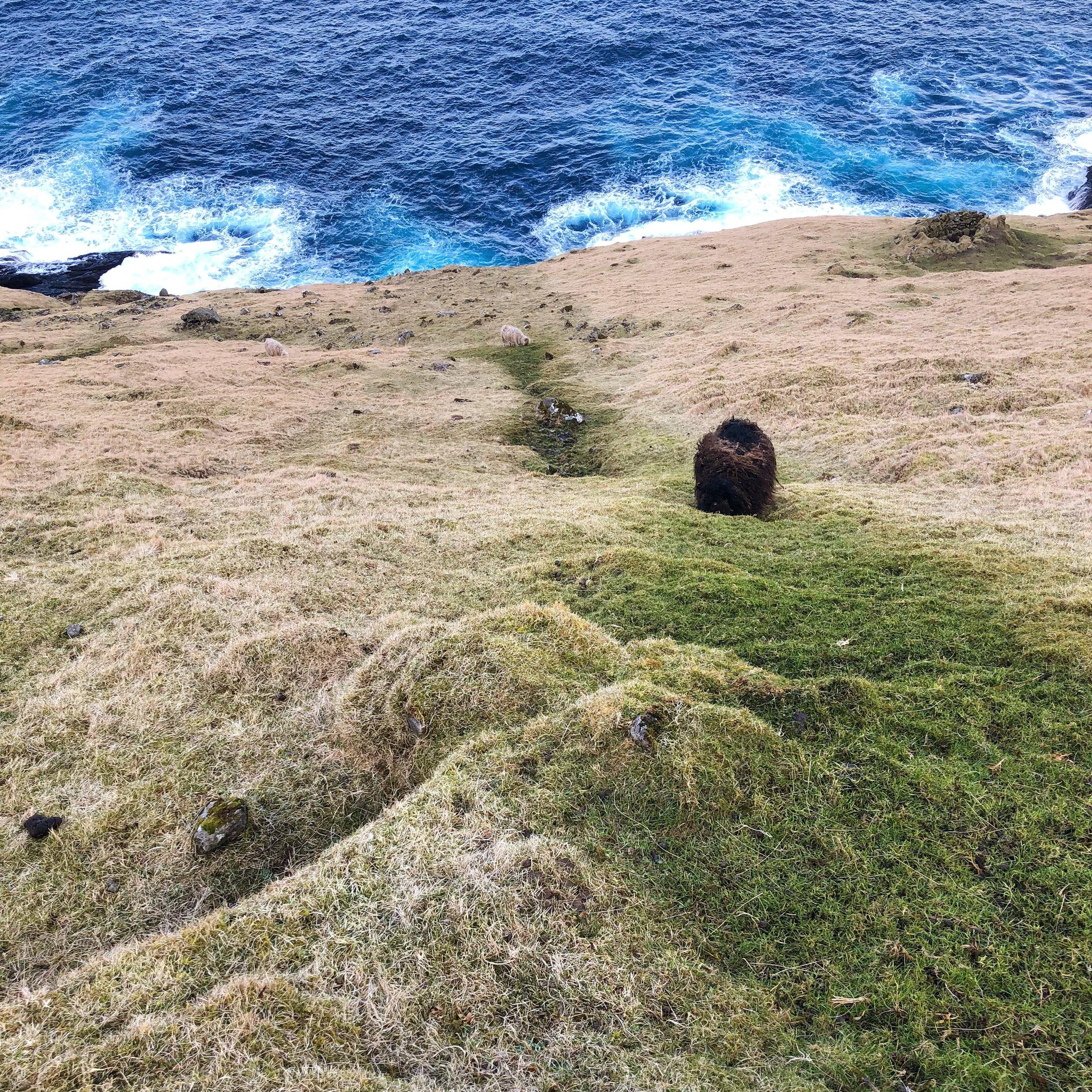 Faroe Trip