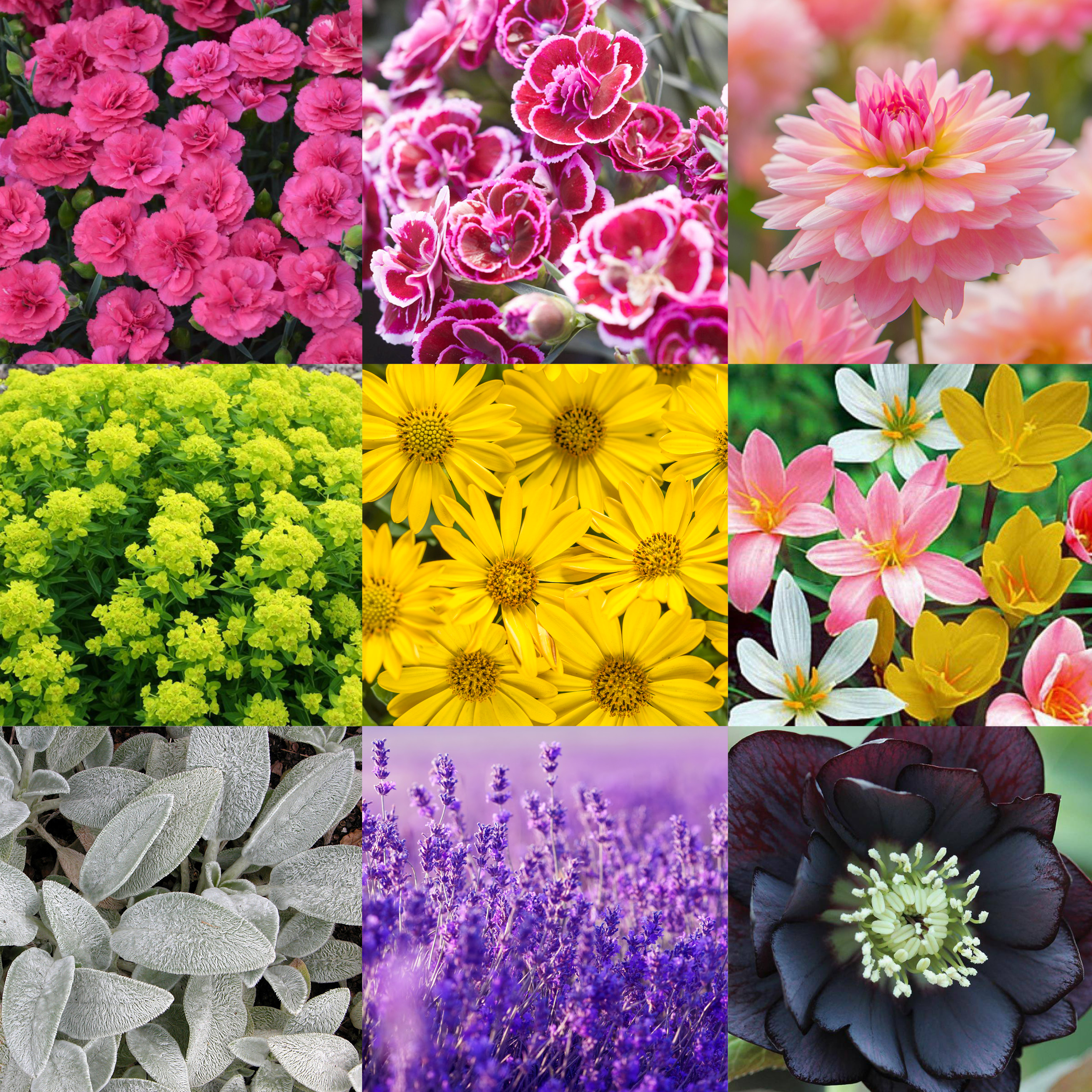 Perennial color story.jpg