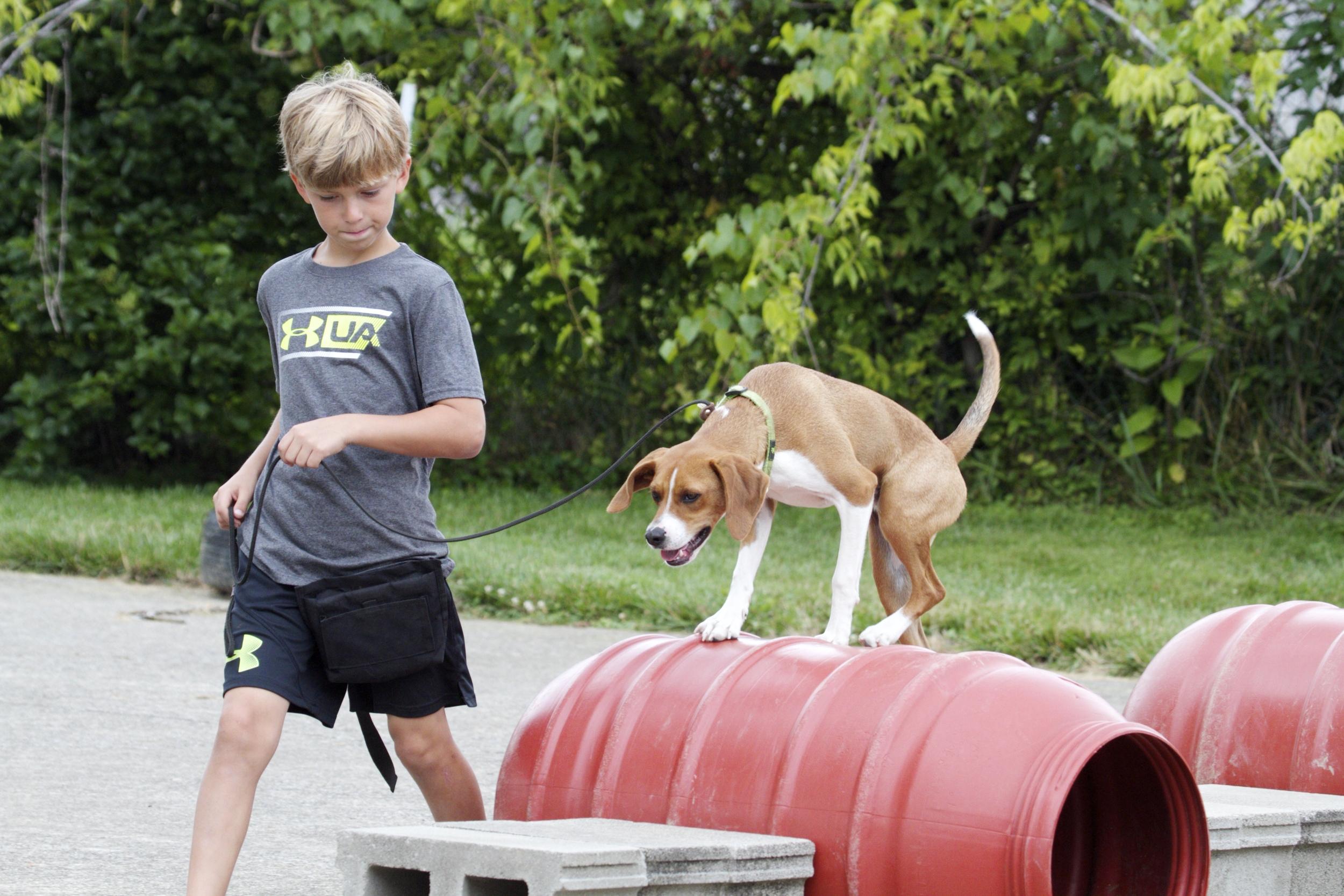 Stonnie Dennis Dog Training Photography