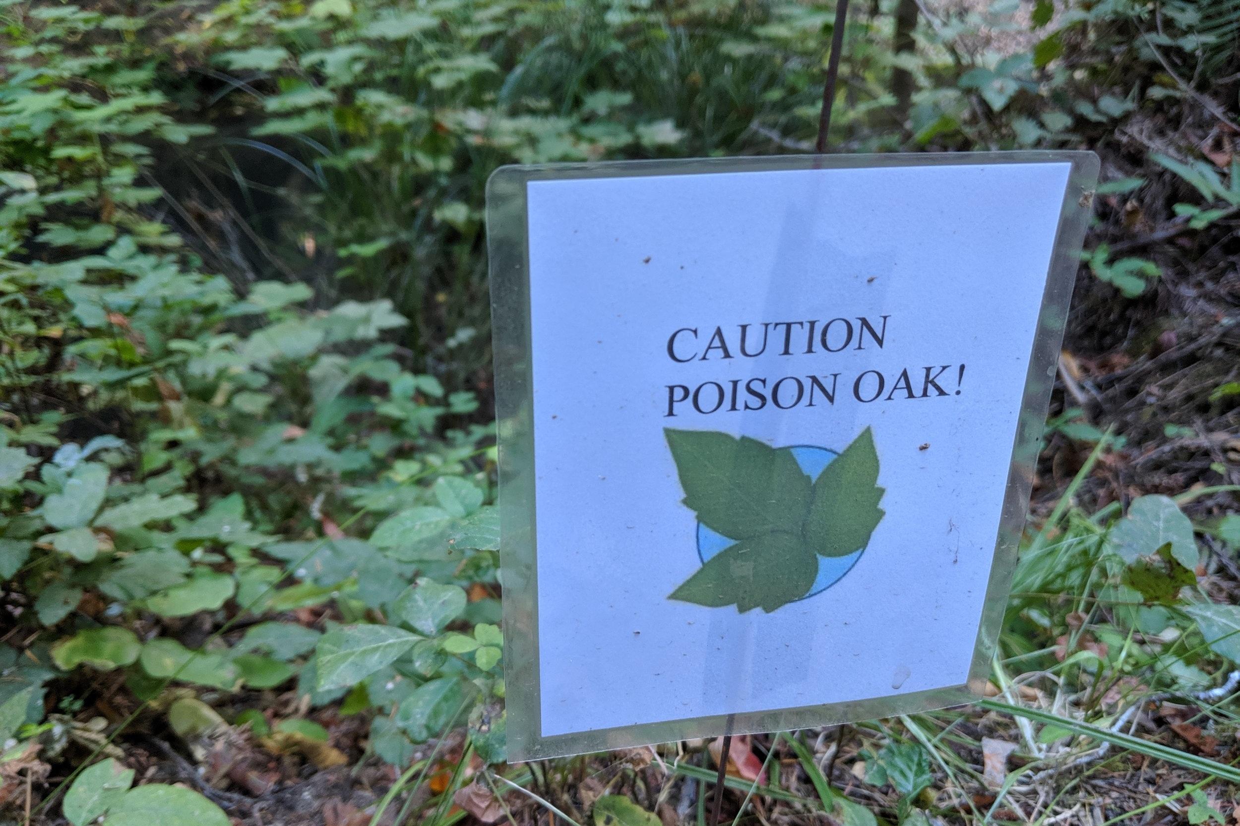 poison_oak.jpg