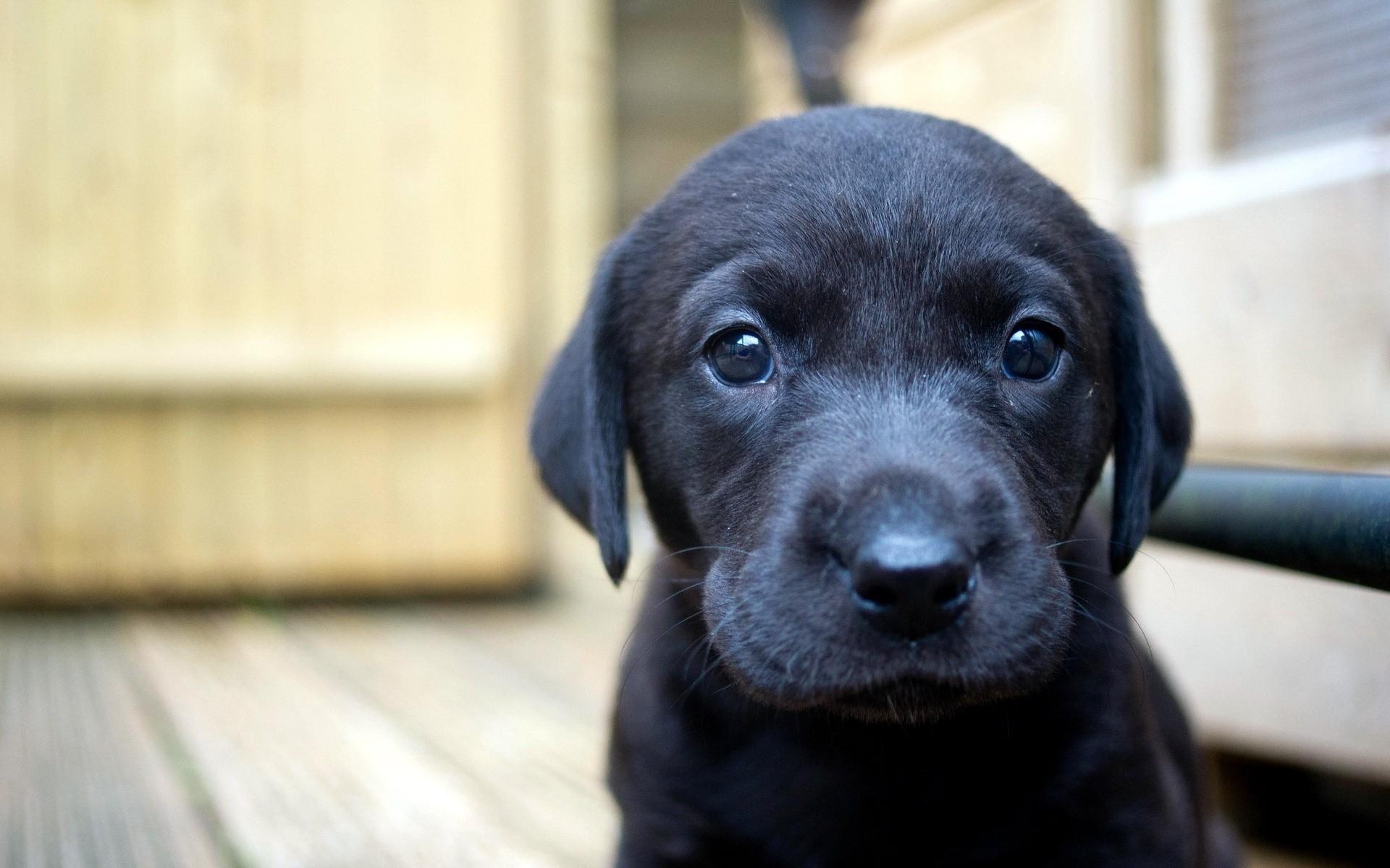 puppy_dog_face_eyes_44638_1920x1200.jpg