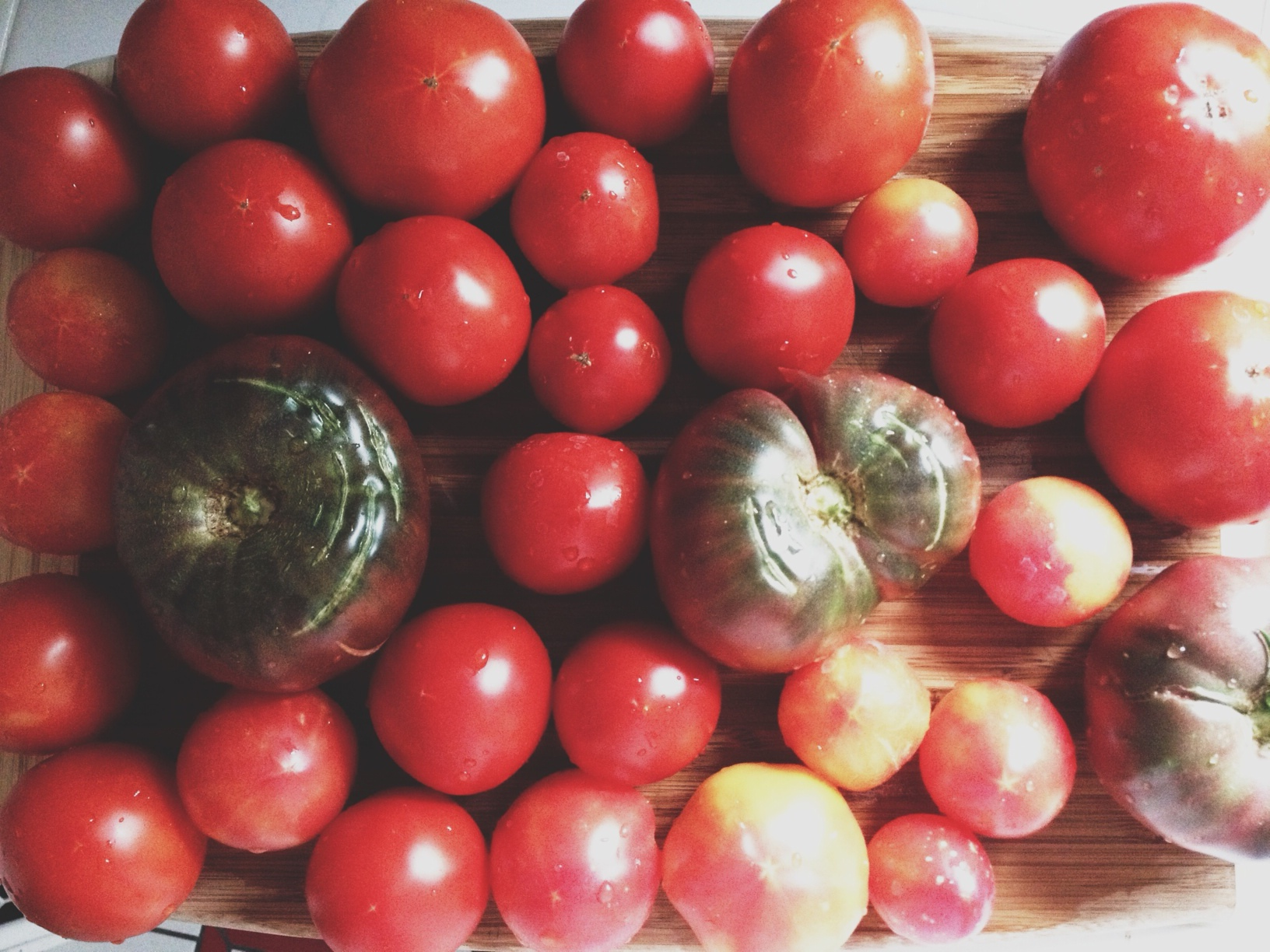 tomato10.jpg