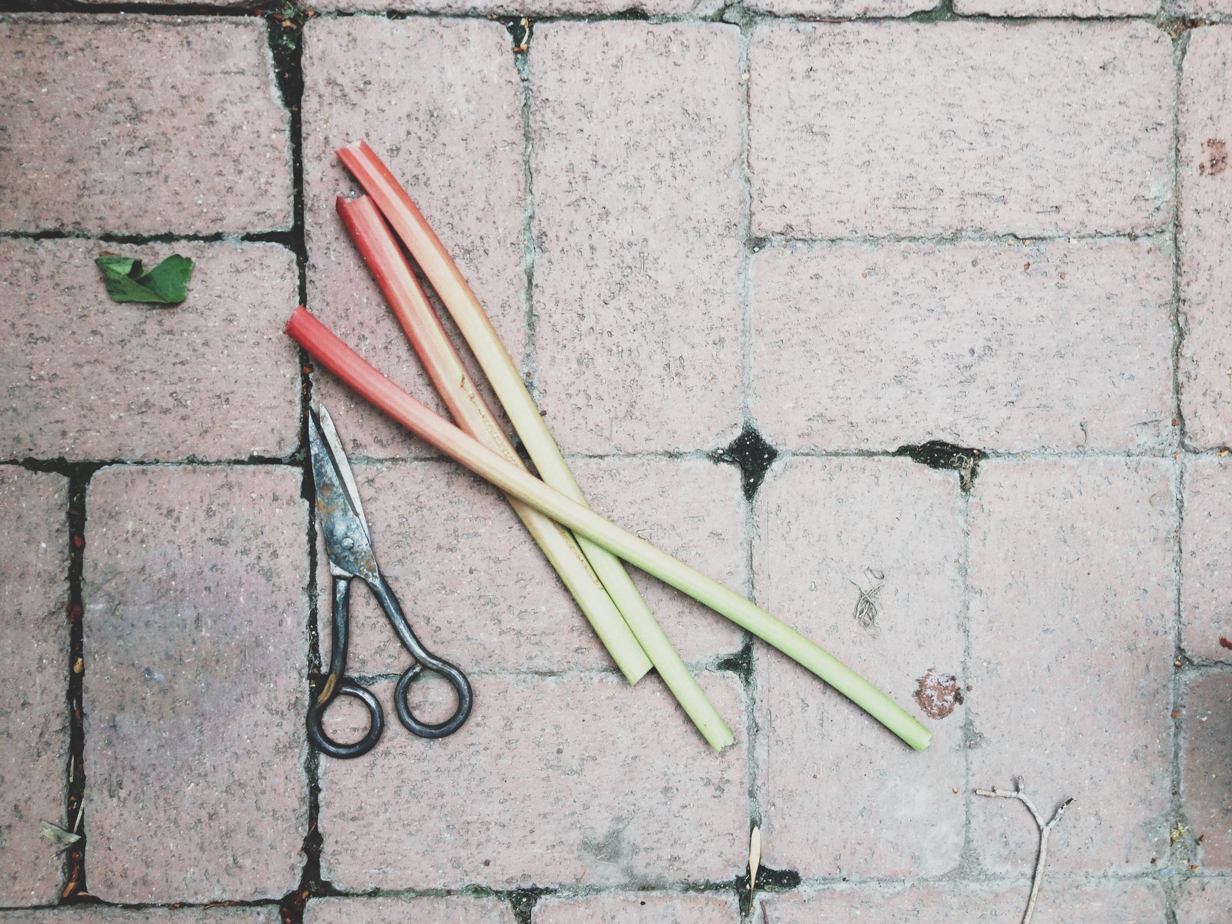 Rhubarb (2).JPG