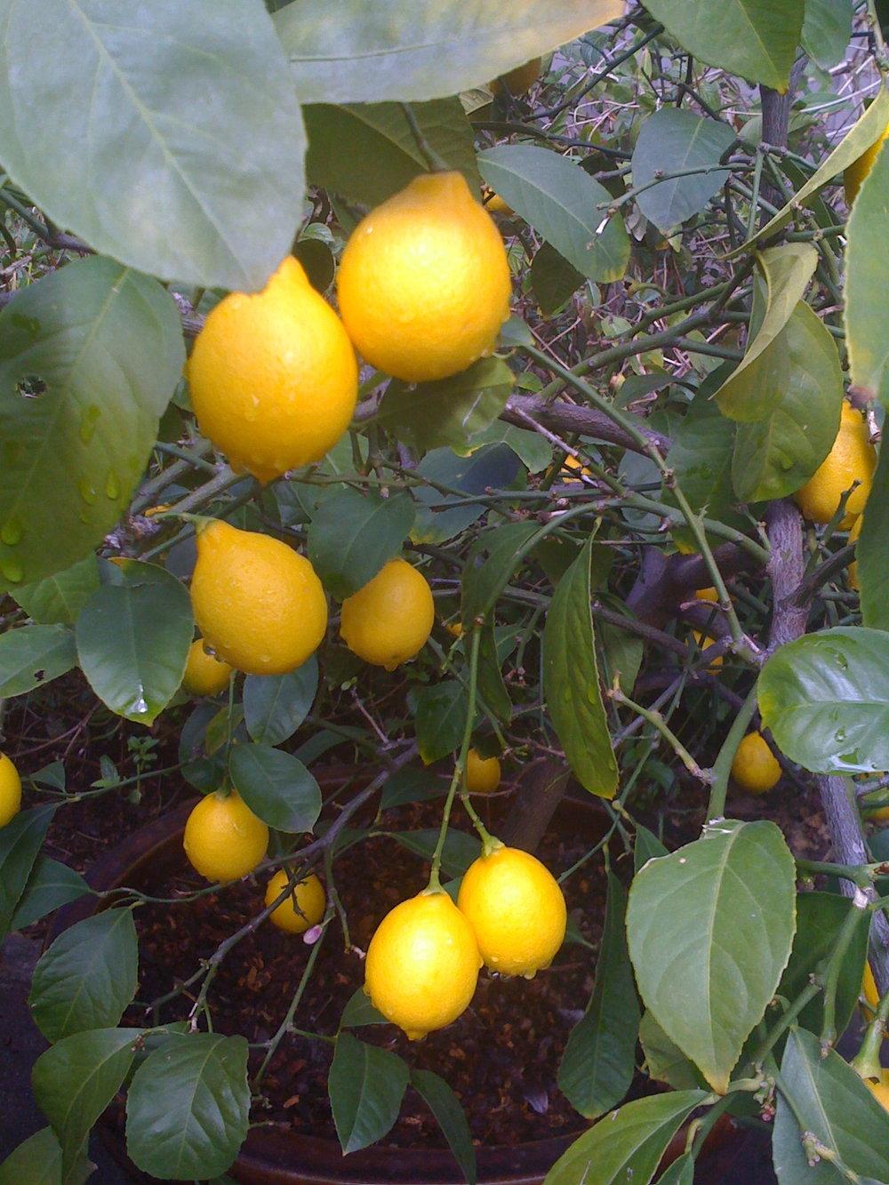forgotten fruit.jpg