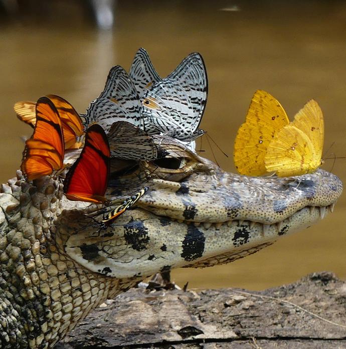 butterflied croc.jpg