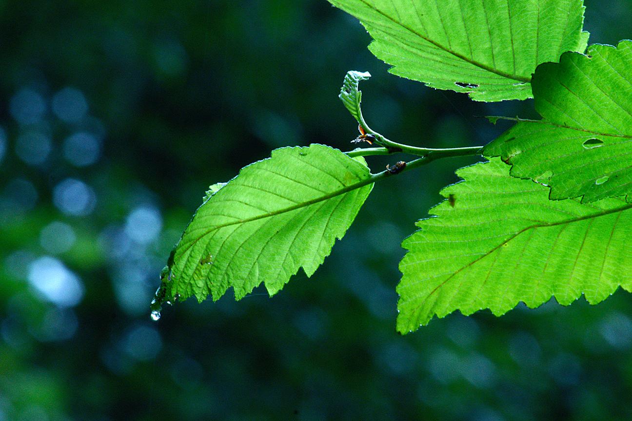 dewdrop leafDSC04160.JPG