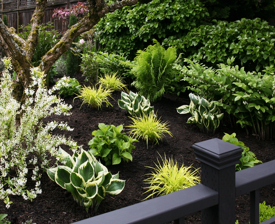 Emerging hostas, grasses, and hydrangeas. Photo by Holly Stickley