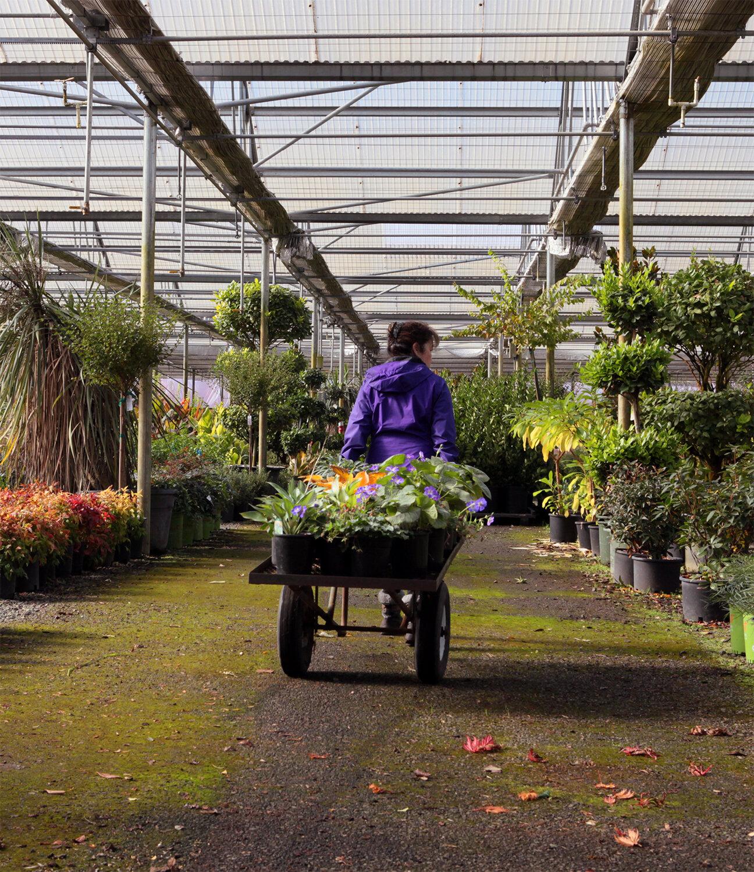 Holly Pulling Cart at Cascadia Nursery-CROP-1500.jpg