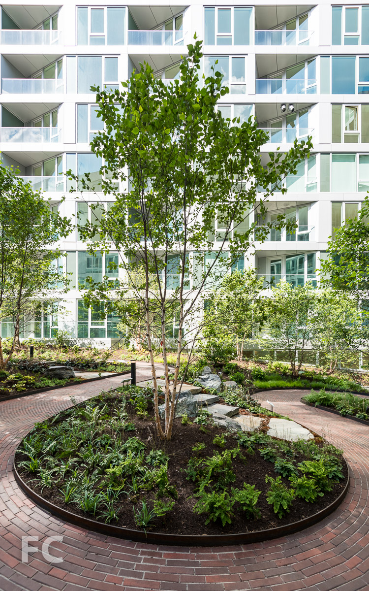 The courtyard's winding brick path and newly planted trees.