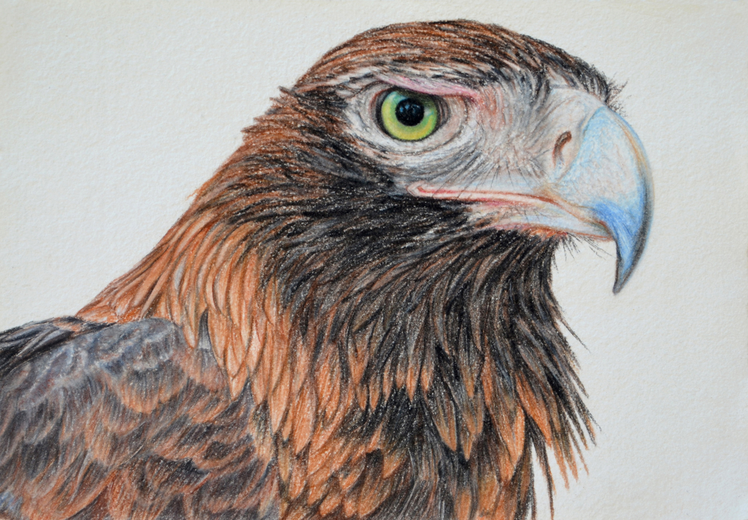 Wedge-tailed Eagle  21 x 30 cm  Drawing, Carbothello pastel on handmade paper  $650 framed   click to view in Birdland series gallery 1