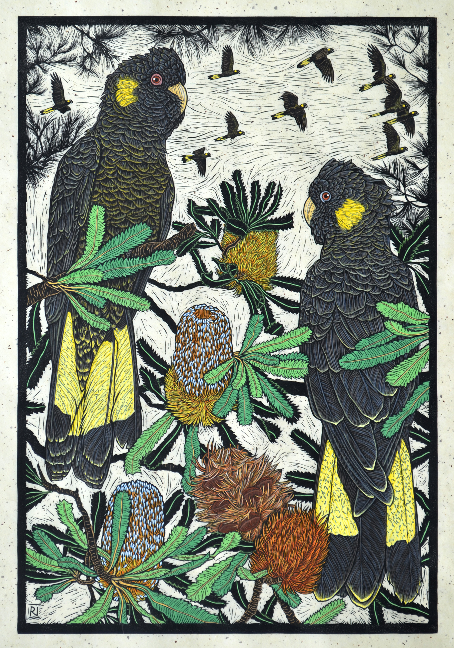 Yellow-Tailed Black Cockatoo & Banksia  Hand coloured linocut