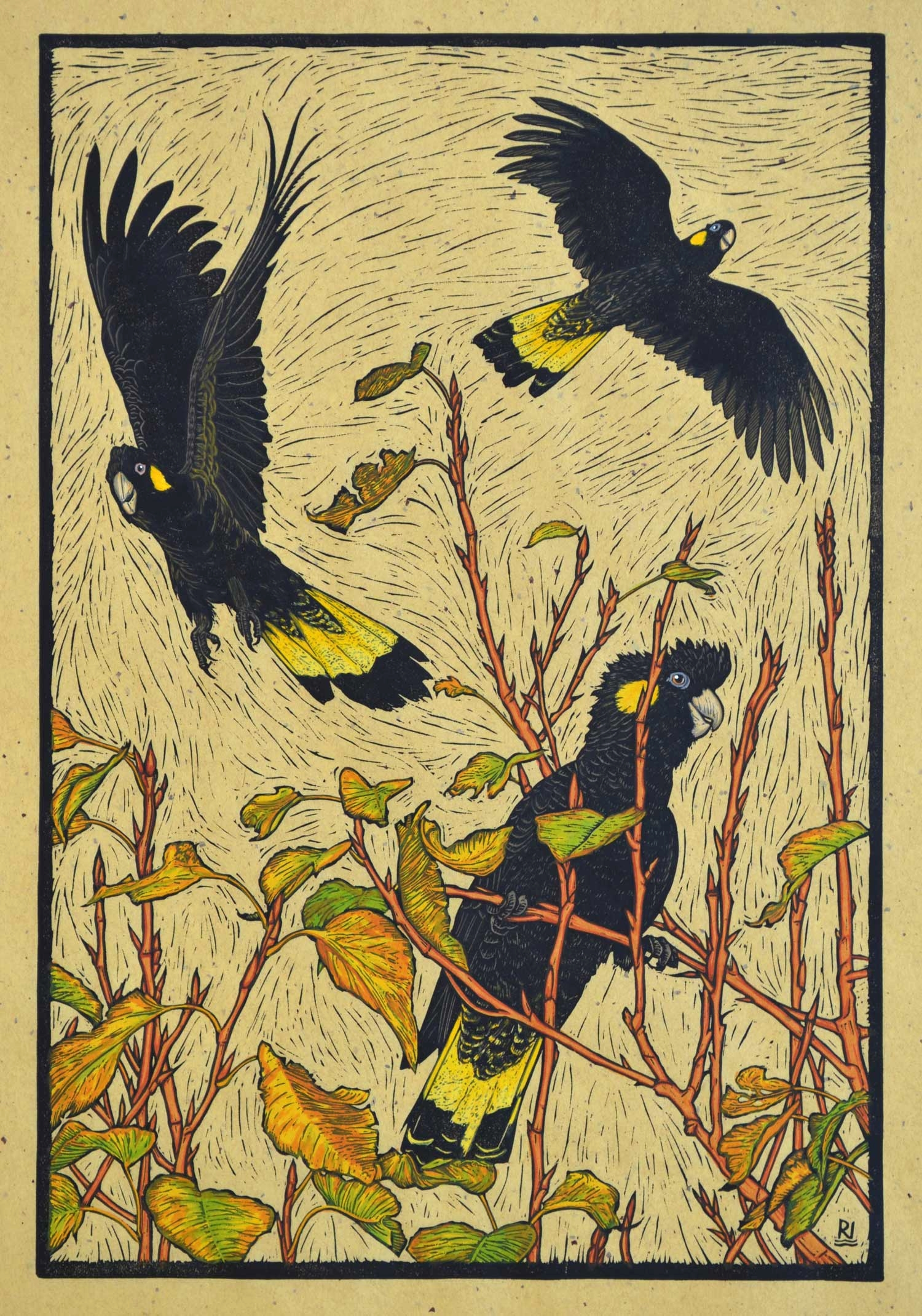 Three Yellow-tailed black Cockatoos (hand-coloured version)  53.5 x 36.5 cm, edition of 50  Hand-coloured linocut on handmade Japanese paper  $1,100