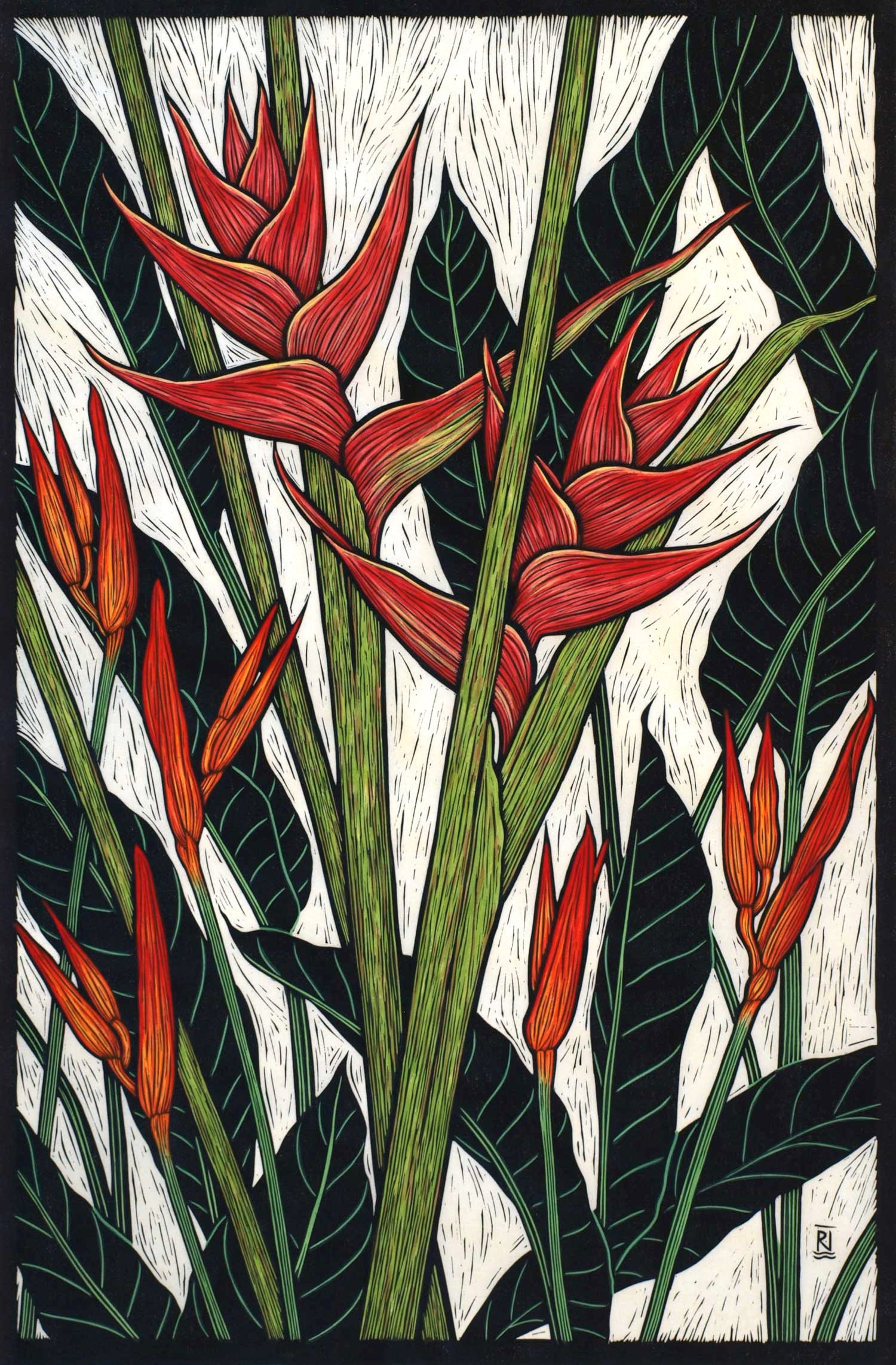 HELICONIA  78.5 X 51.5 CM EDITION OF 50  HAND COLOURED LINOCUT ON HANDMADE JAPANESE PAPER  $1,550