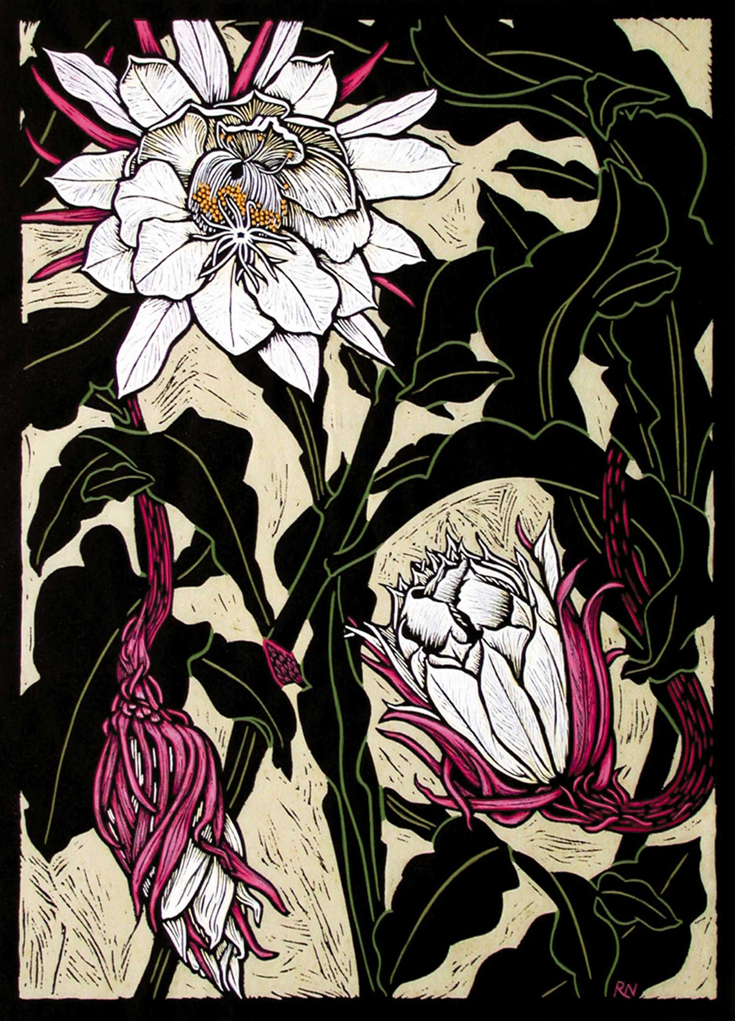 NIGHT FLOWERING CACTUS  48.5 X 35 CM EDITION OF 50  HAND COLOURED LINOCUT ON HANDMADE JAPANESE PAPER  $1,100