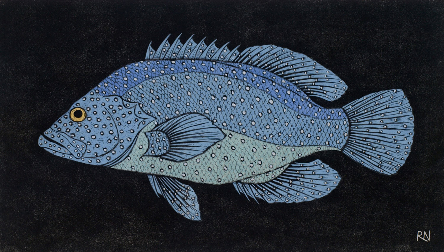 SHOAL 1  30 X 52.5 CM EDITION OF 50  HAND COLOURED LINOCUT ON HANDMADE JAPANESE PAPER  $850
