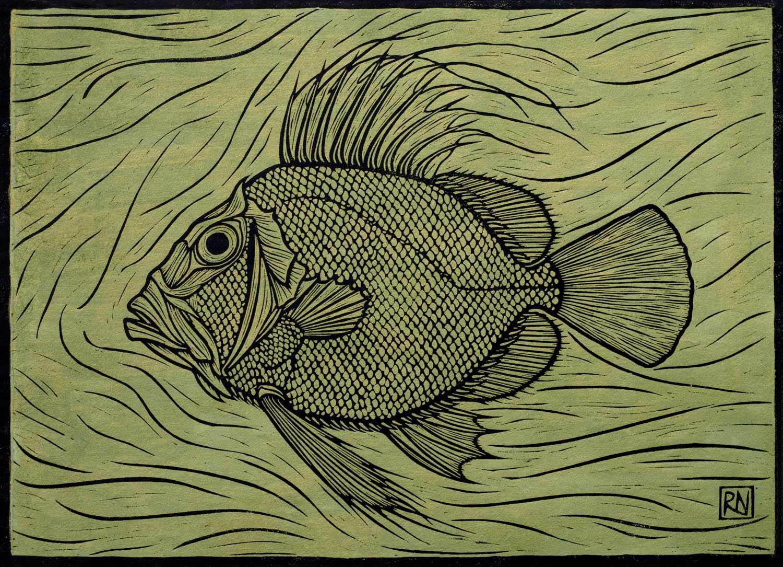 JOHN DORY  30 X 41.5 CM, EDITION OF 50  HAND-COLOURED (metallic paints), LINOCUT ON HANDMADE JAPANESE PAPER  $750