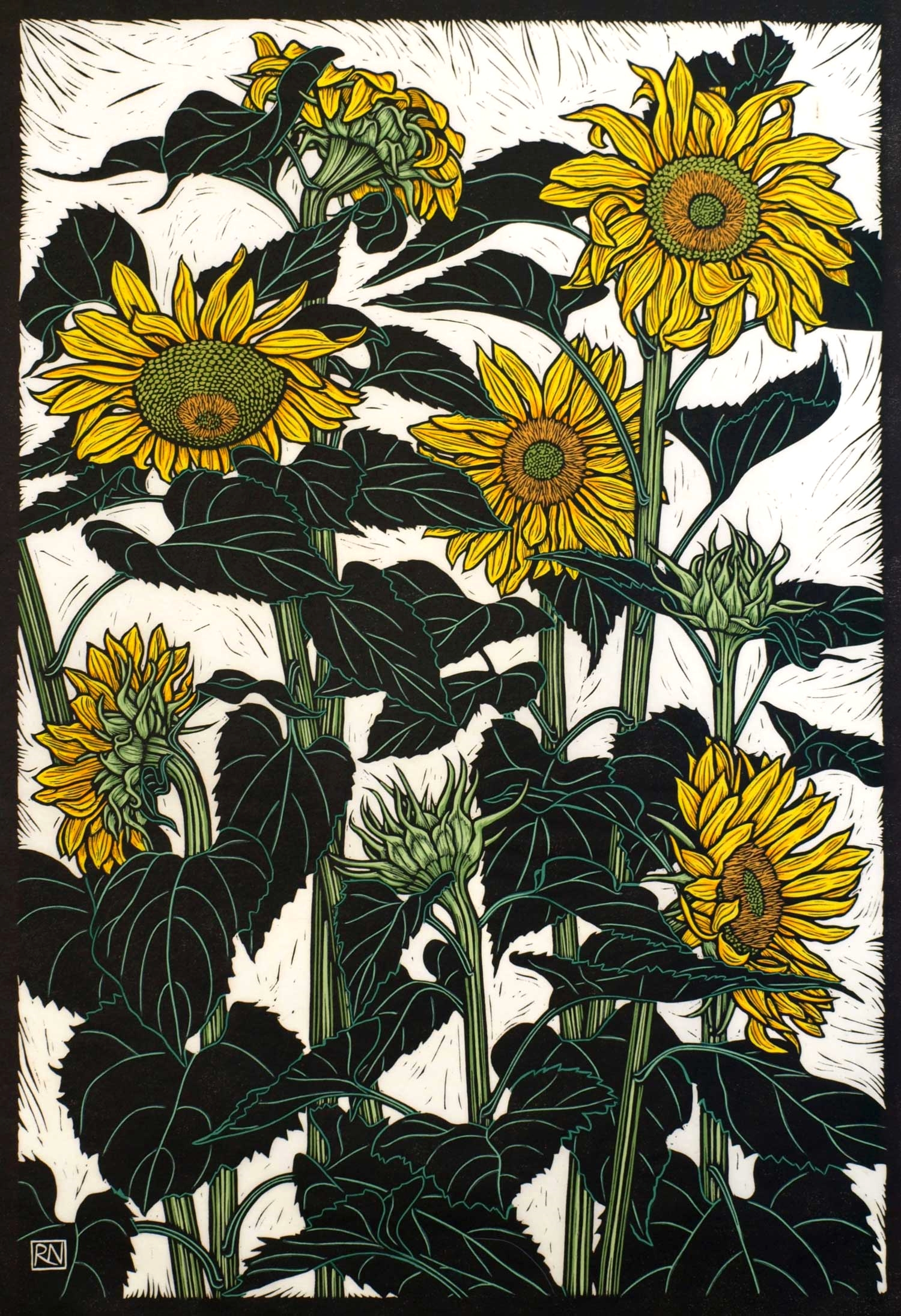 SUNFLOWERS NEWPORT  74.5 X 51 CM, EDITION OF 50  HAND-cOLOURED LINOCUT ON HANDMADE JAPANESE PAPER  $1,700