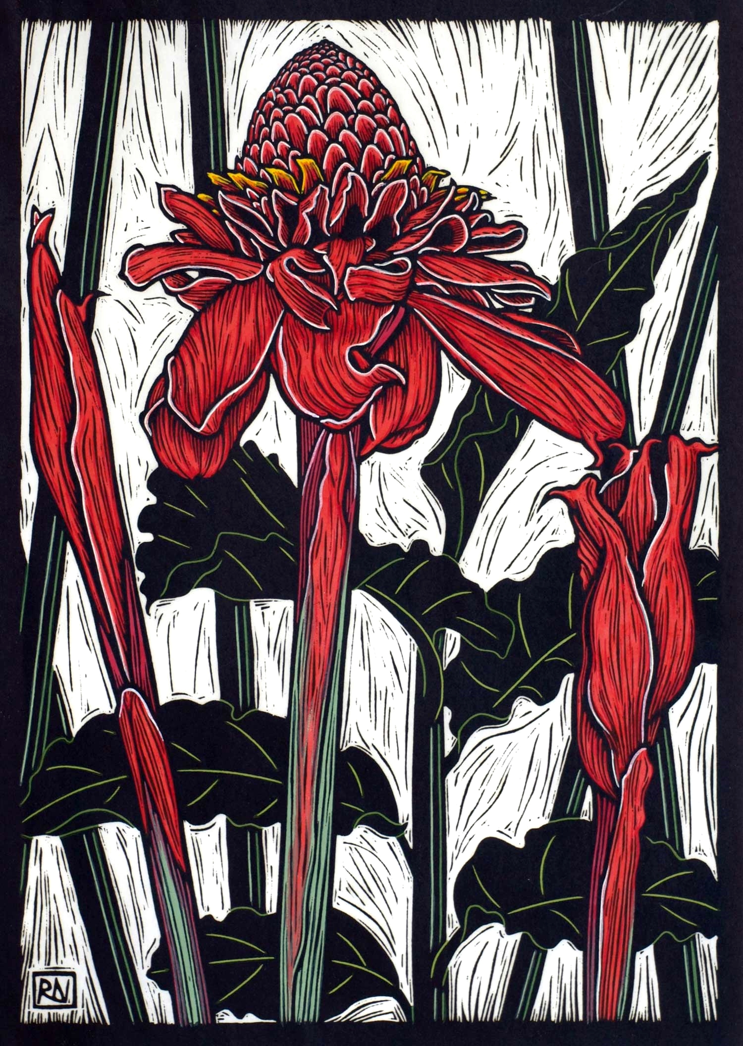 TORCH GINGER  49 X 35 CM, EDITION OF 50  HAND-COLOURED LINOCUT ON HANDMADE JAPANESE PAPER  $1,100