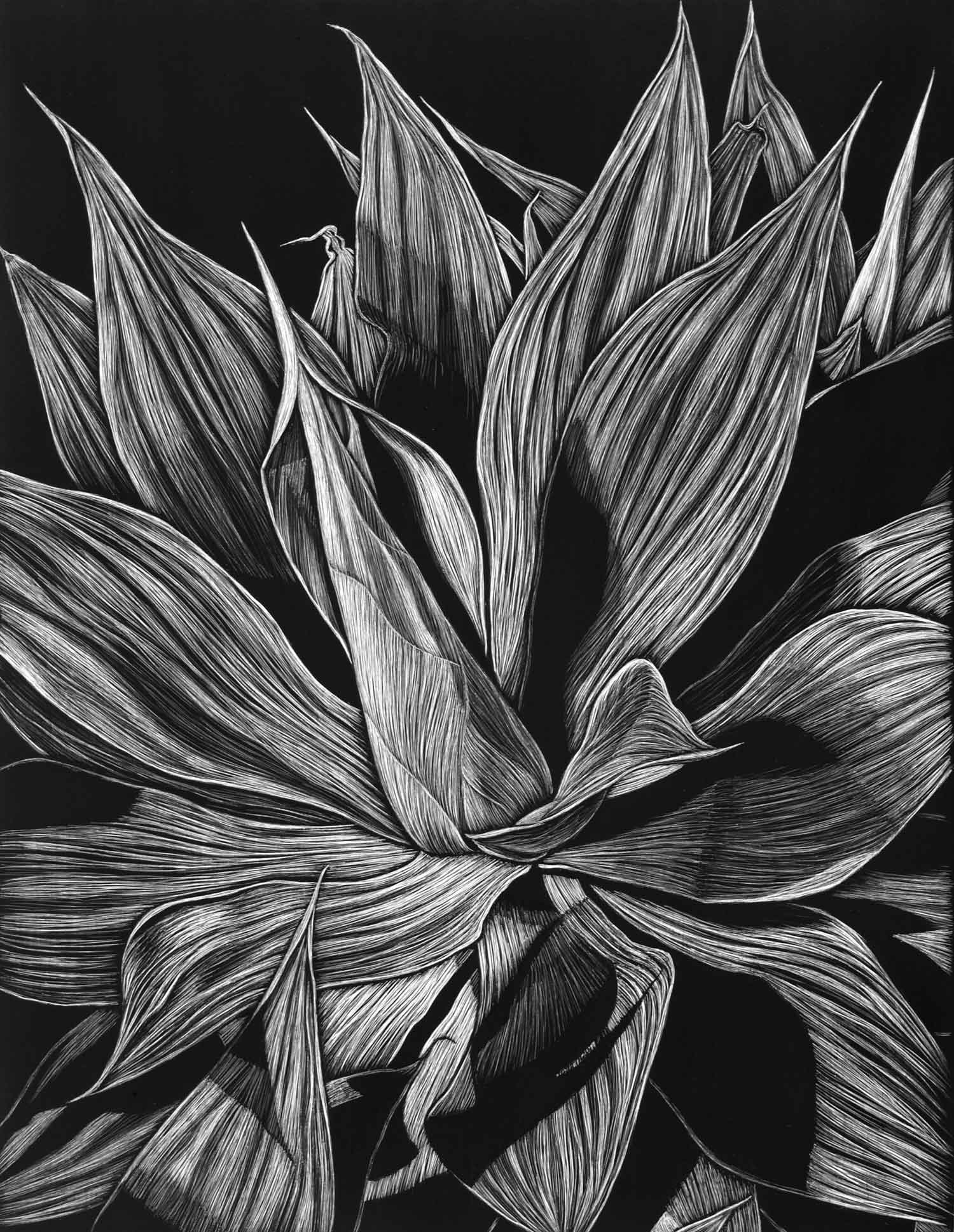 AGAVE, CLAREVILLE BEACH II  45.5 X 35.5 CM, EDITION OF 50  PIGMENT ON COTTON RAG PAPER  $800
