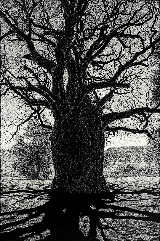 boab-tree-near-wyndham-engraving-rachel-newling.jpg