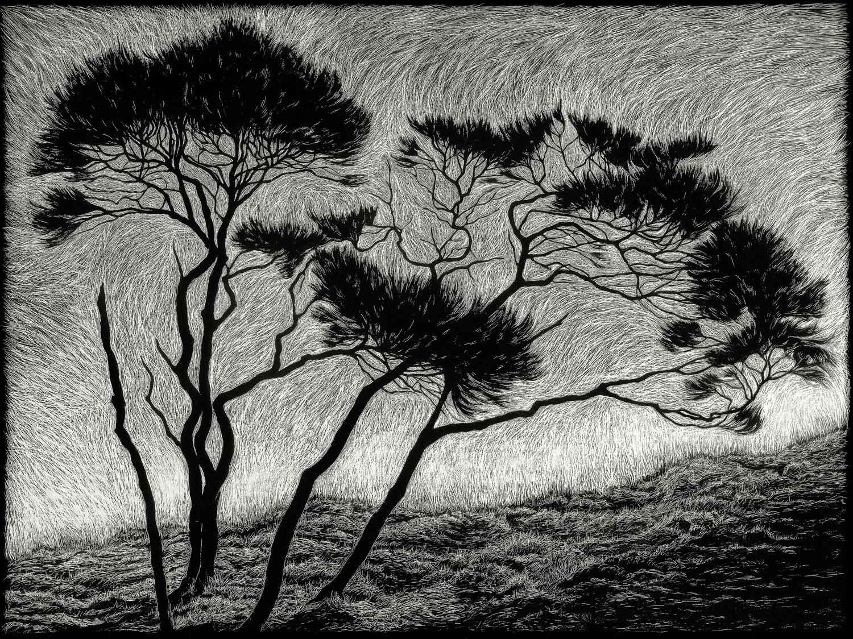 windblown-rachel-newling.jpg