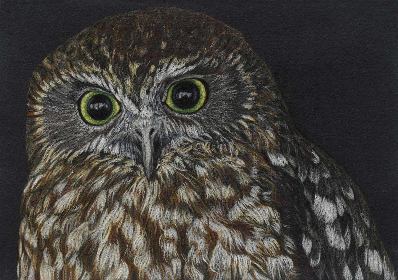 boobook-owl-2-drawing-rachel-newling.jpg