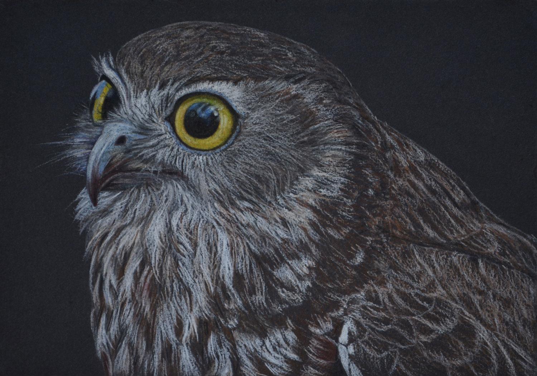 boobook-owl-3-drawing-rachel-newling.jpg