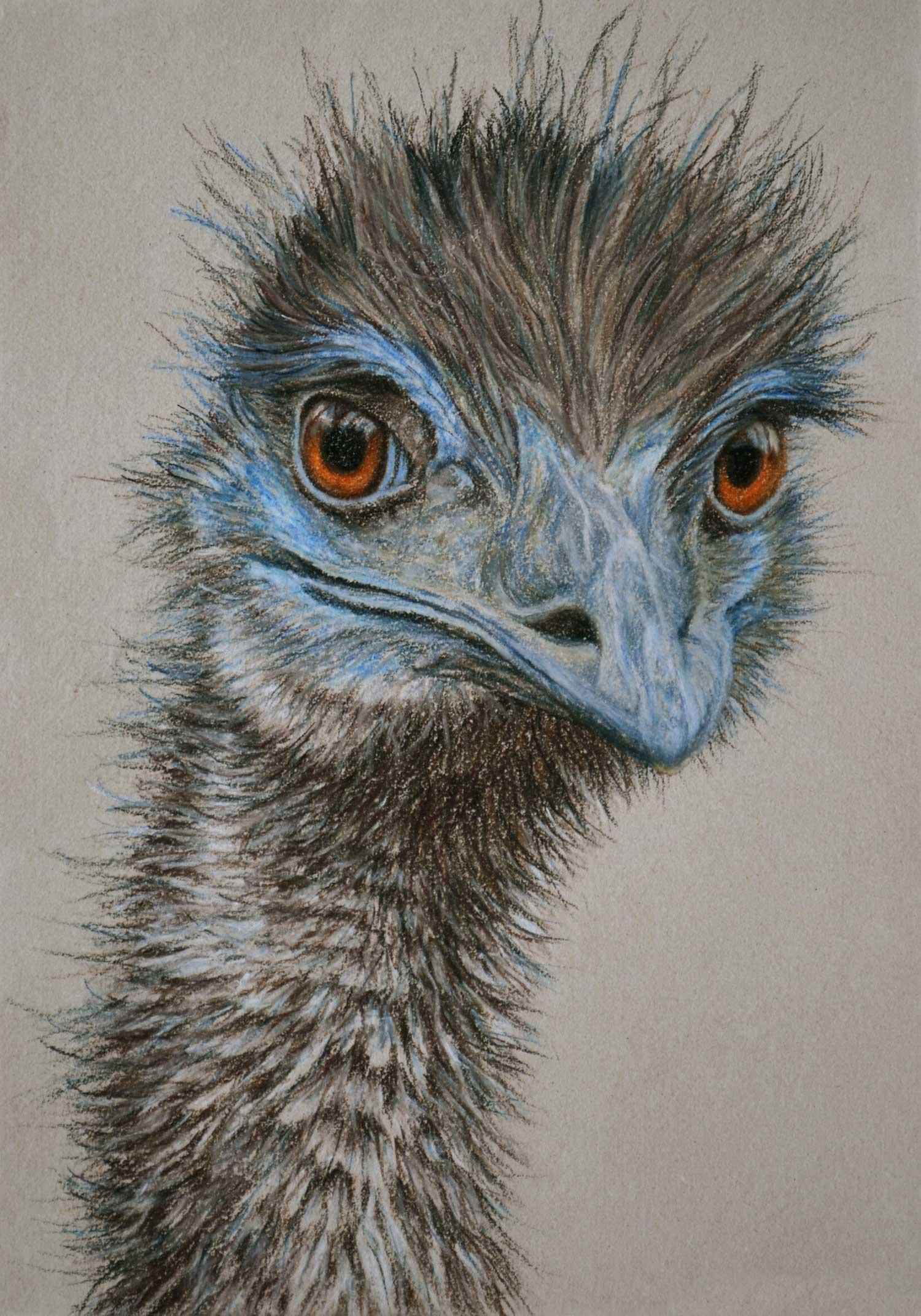 emu-2-drawing-rachel-newling.jpg