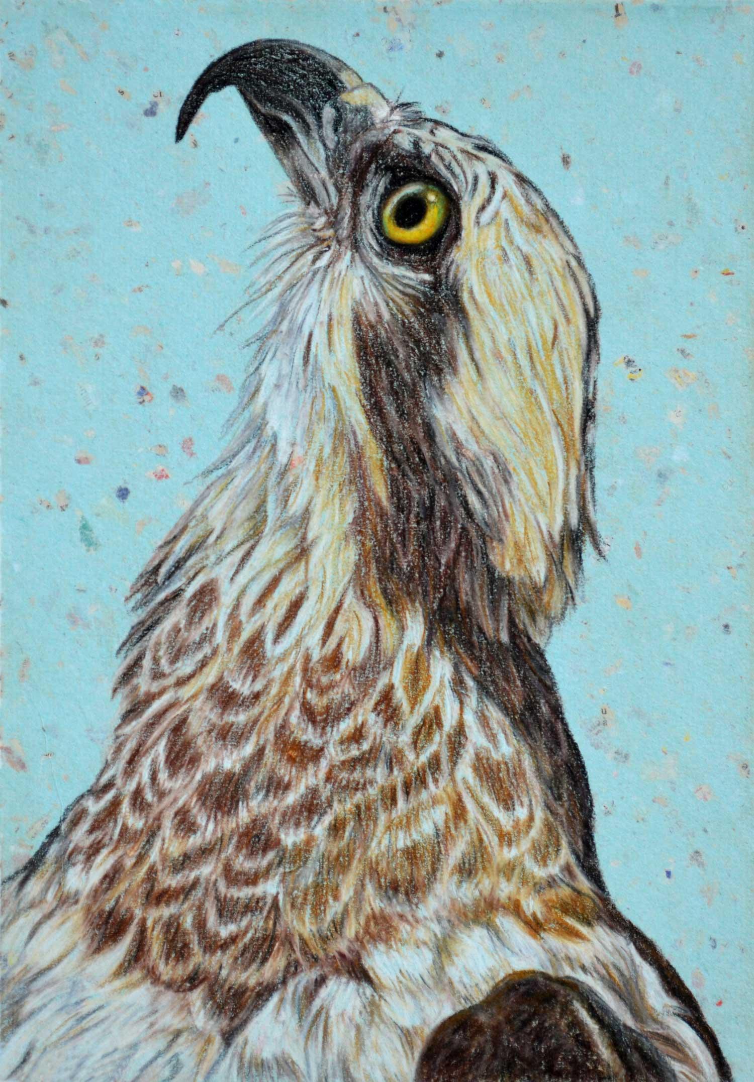 osprey-drawing-rachel-newling_edited-1.jpg