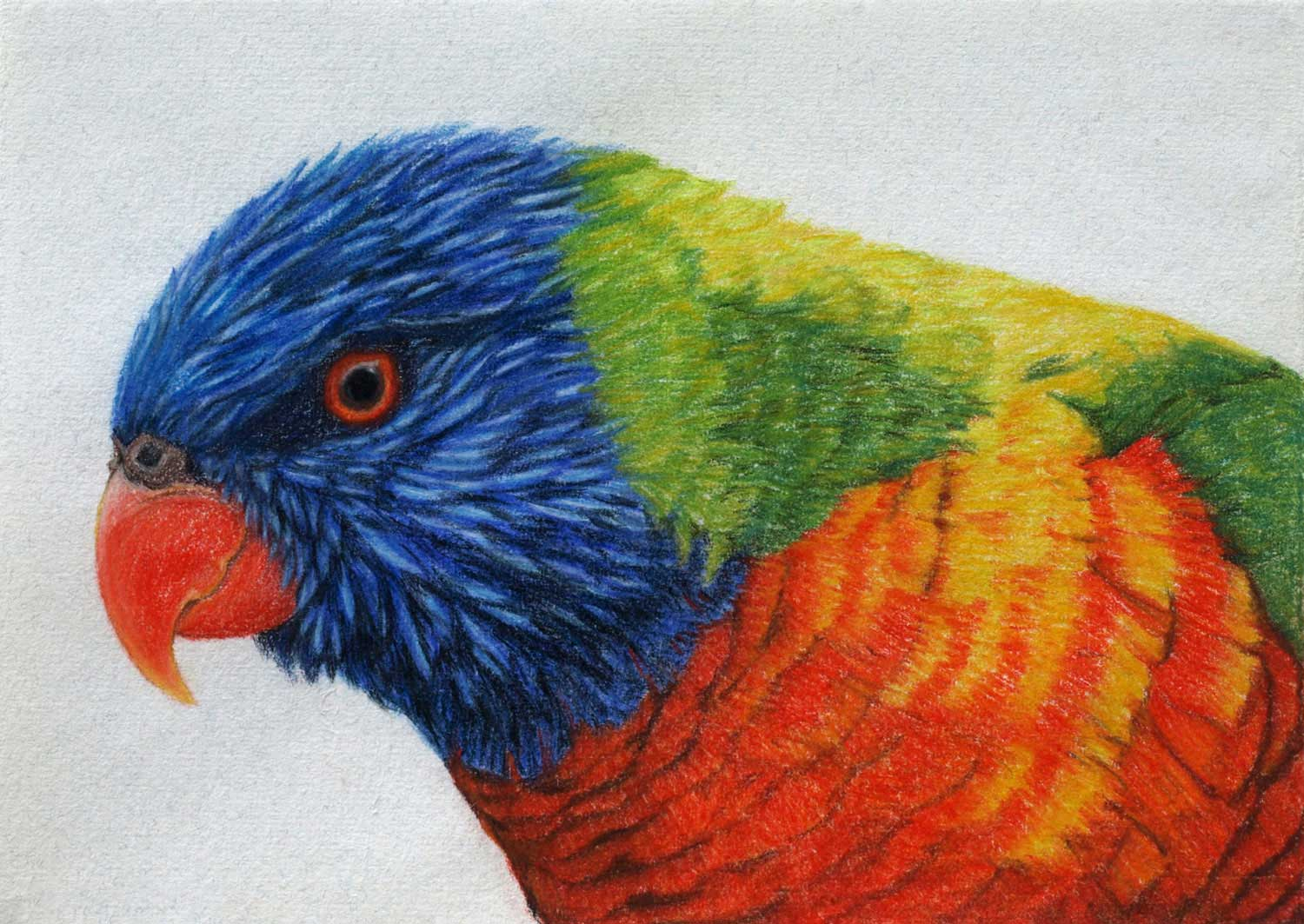 Rainbow Lorikeet 21 x 30 cm  Pastel on handmade paper  $800